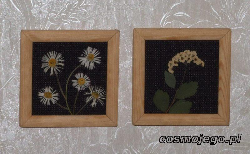 Obrazki z suszonych kwiatów